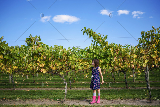 Young girl walking through a vineyard