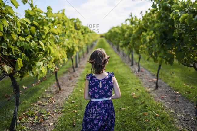 Young girl walking through a vineyard