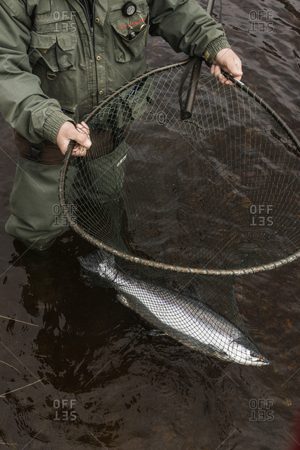 Bettyhill, Scotland - April 22, 2017: A fisherman holds a large salmon in a net on a river in northern Scotland