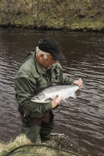 Bettyhill, Scotland - April 22, 2017: A fisherman holds a large salmon in a river in northern Scotland