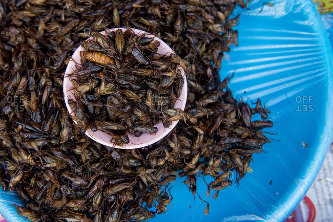 Fried grasshoppers in a bowl at the market in Chiang Mai, Thailand
