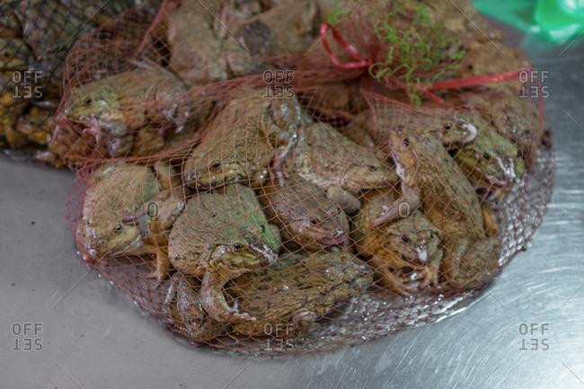 Bunch of frogs tied in a net