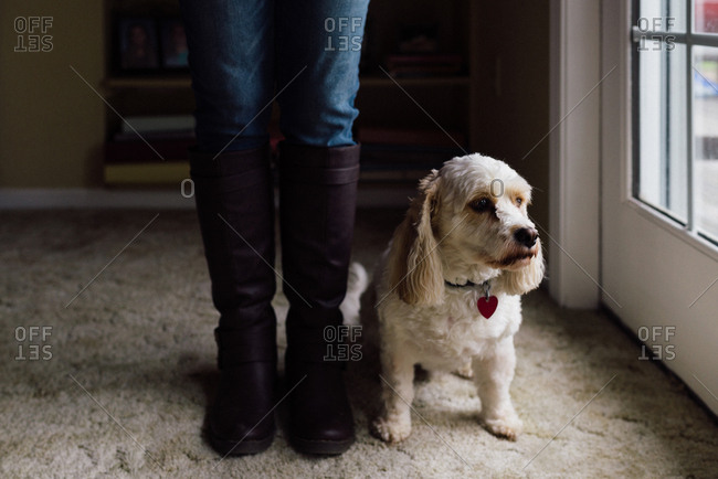 Dog and woman standing by the door