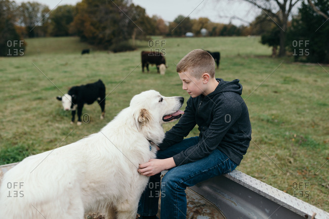 Boy spending time with his dog in the back of a pickup  truck