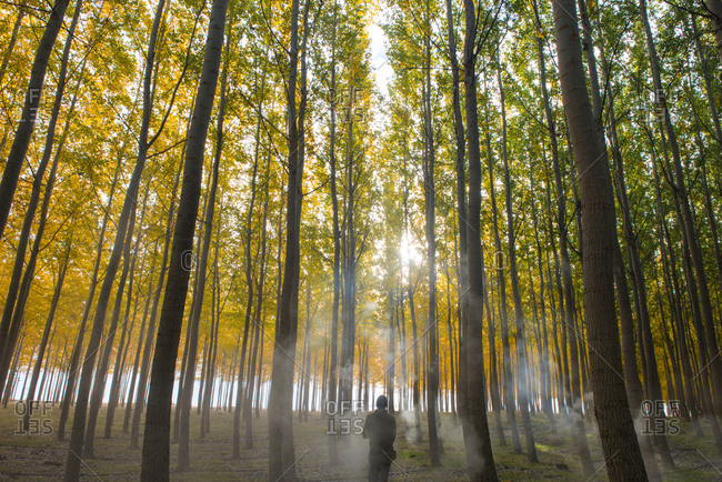 Rear view of man standing amidst autumn trees during foggy weather