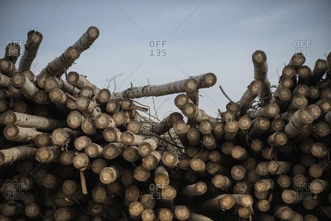 Logs at lumber industry against sky