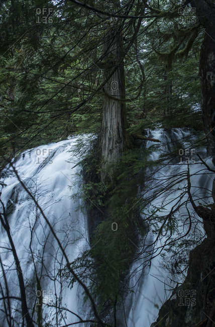 Scenic view of waterfall seen through branches at North Cascades National Park