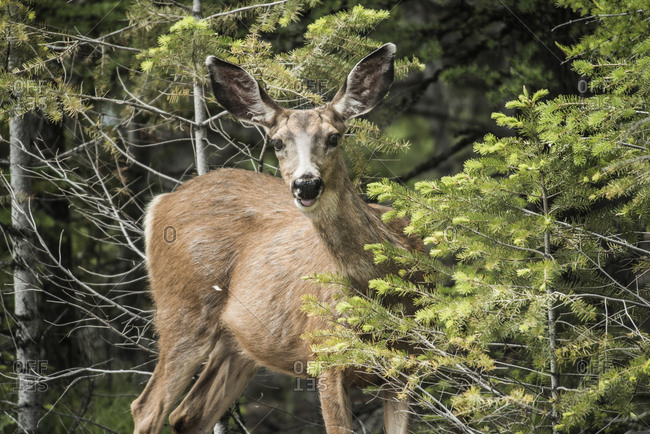 Portrait of deer standing by plants
