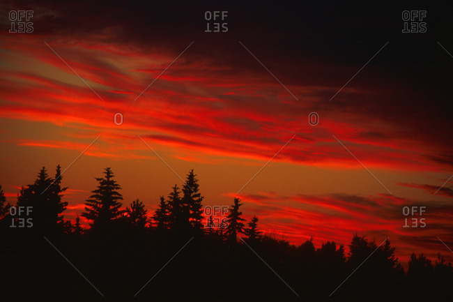 Red sunset with tree line