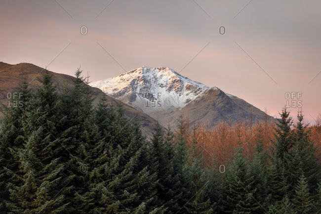 The snow-covered peak of Ben Lui with trees in the foreground during a colorful sunrise