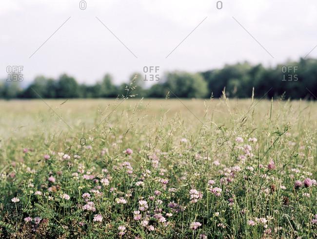 Warm meadow with wildflowers