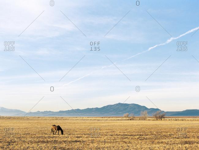 Horse in warm open pasture