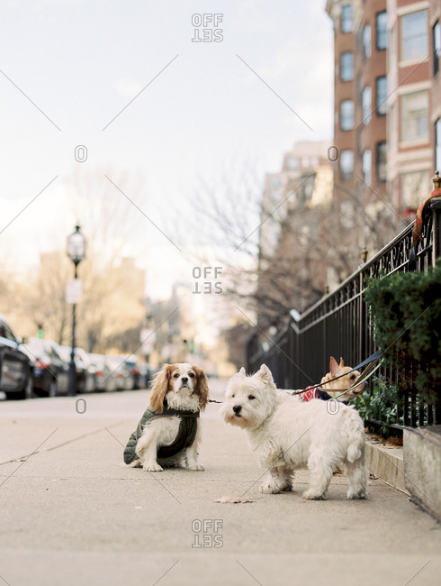 Dogs hanging out together on sidewalk