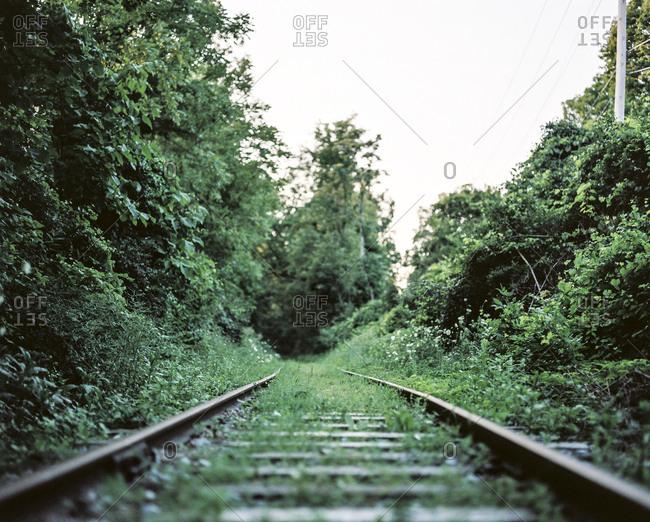 Overgrown greenery at deserted train tracks