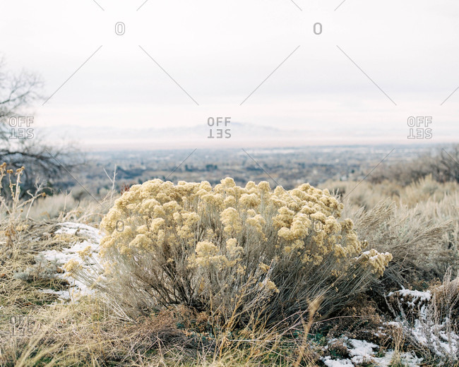 Scenic view of frosted dry terrain