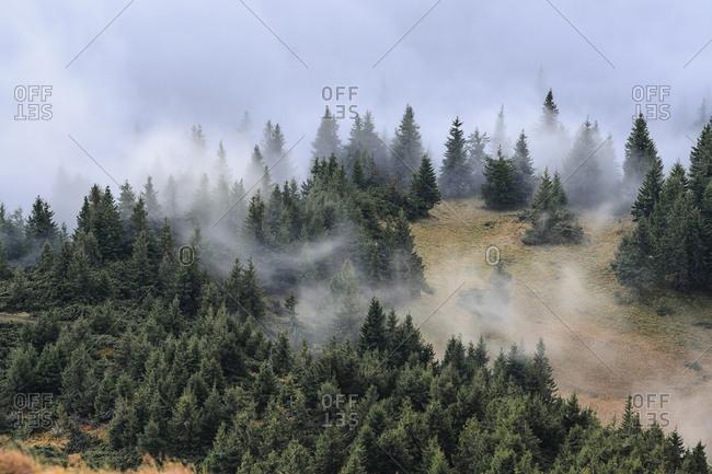 Ukraine, Zakarpattia region, Rakhiv district, Carpathians, Chornohora, Mist over forest