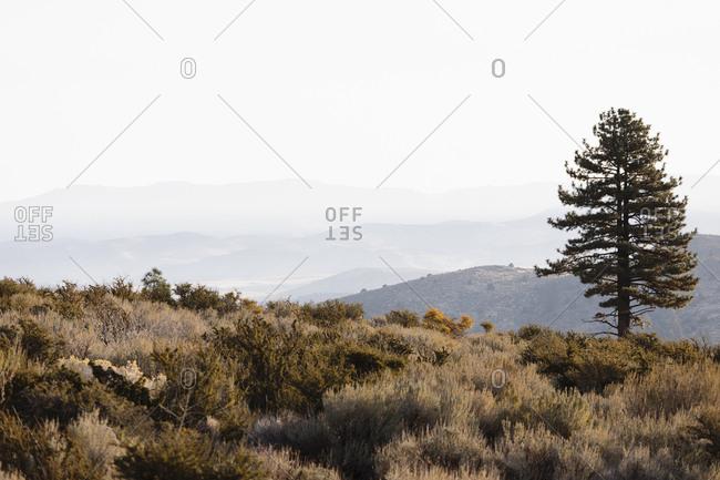 USA, California, Eastern Sierras, Landscape with single tree