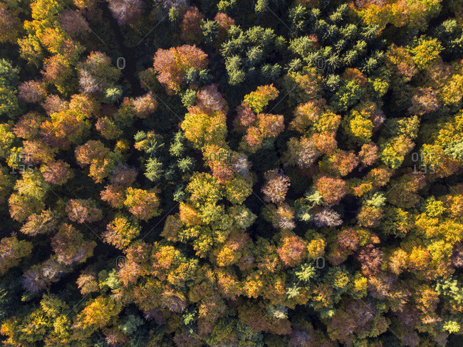 Germany- Bavaria- Fuerstenfeldbruck- Beech Forest in autumn