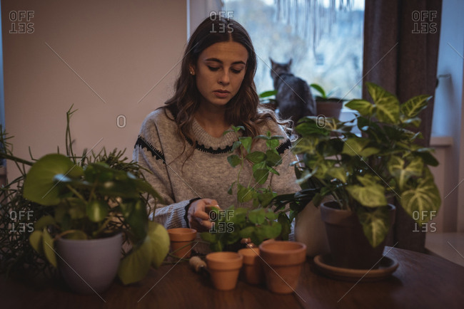 Beautiful woman planting plants in the pot at home