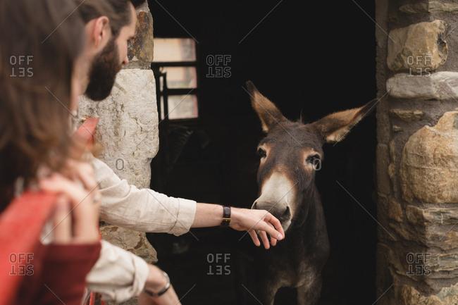 Couple petting donkey in shelter