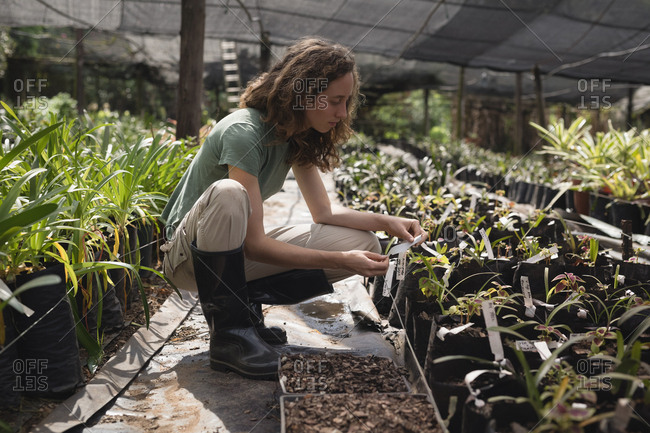 Female farmer looking at plant tag in greenhouse