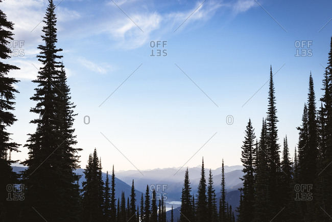 Coniferous tree covered over a mountain at daytime
