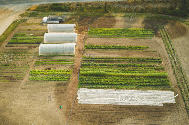 Aerial of plantations in the farm on a sunny day