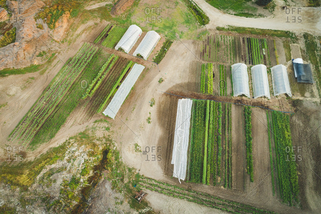 Aerial of plants cultivated in the farm