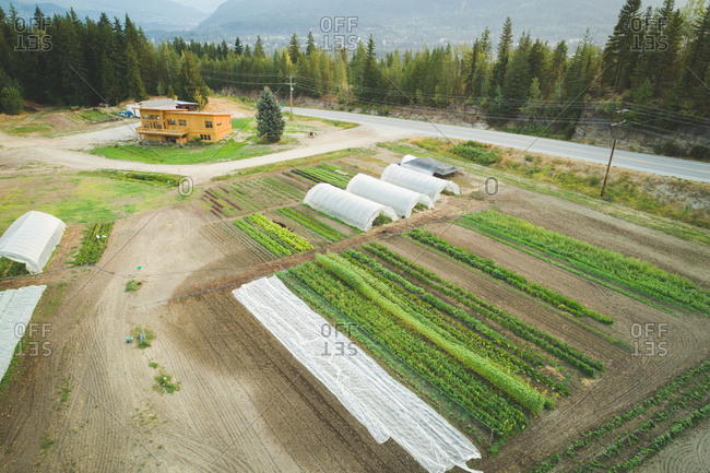 Aerial of crop cultivation and greenhouse in the farm
