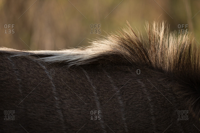 Close-up of wildebeest at safari park