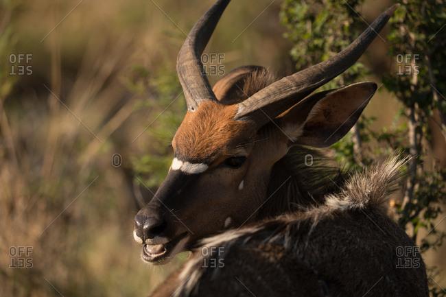 Wild animal at safari park on a sunny day