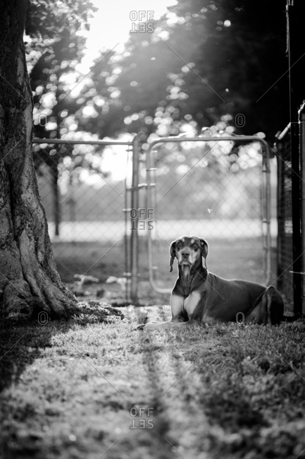 Dog waiting patiently outside