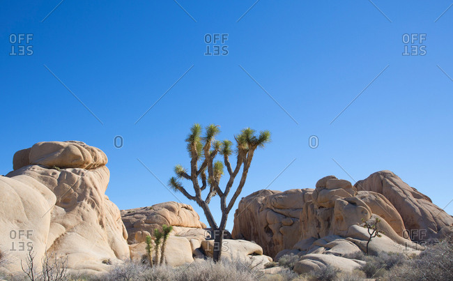 Rocks and tree at Joshua Tree National Park