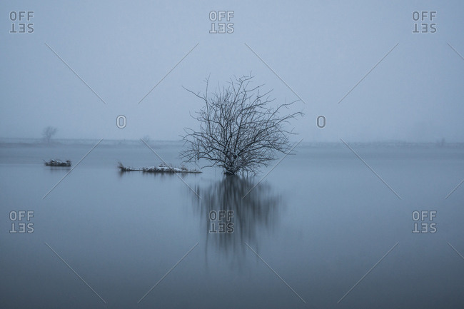 Bare tree in lake against sky during foggy weather