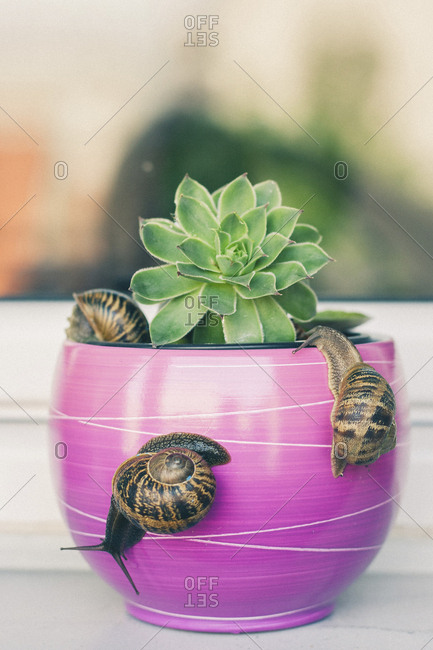 Close-up of snails on potted plant