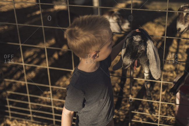 High angle view of boy petting goat in animal pen
