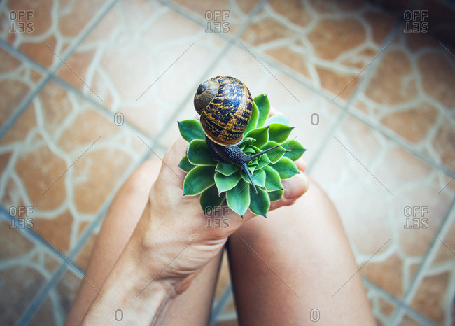 Midsection of woman holding succulent plant with snail while sitting at home