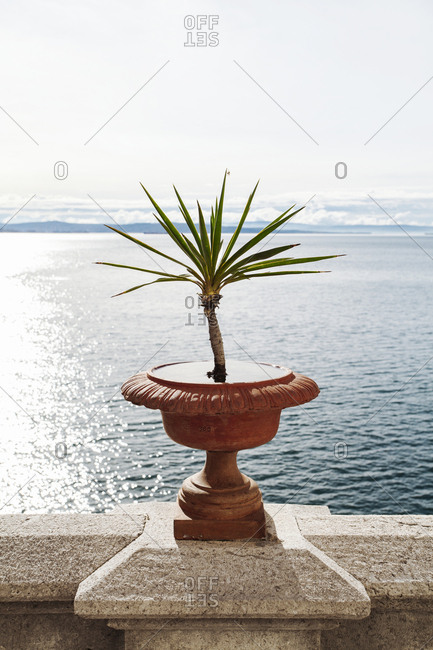 Plant growing on retaining wall by sea against clear sky