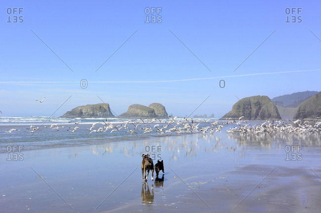 Rear view of dogs running while birds flying at beach against blue sky