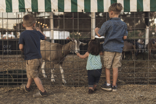 Rear view of siblings looking at goat in animal pen
