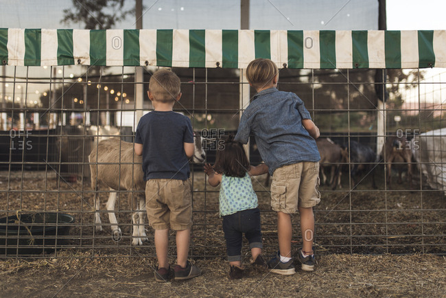Rear view of siblings looking at goat in animal pen at farm