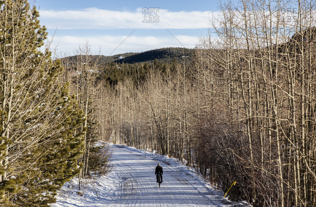 Rear view of woman riding bicycle on snow covered road in forest