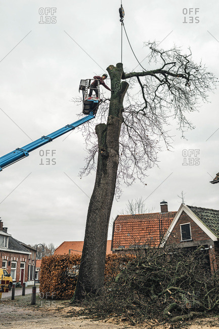 Geesteren (GLD), Netherlands - December 5, 2017: Tree surgeon on platform pointing where to saw tree trunk