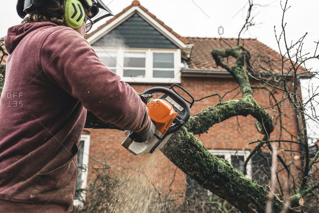 Geesteren (GLD), Netherlands - December 5, 2017: Arborist chain sawing pieces of wood of cut down old oak
