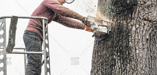 Geesteren (GLD), Netherlands - December 5, 2017: Tree surgeon in platform cutting thick tree trunk with chainsaw