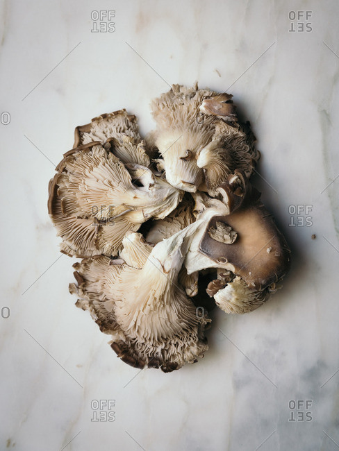 Cluster of mushrooms on marble