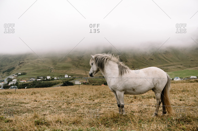 White horse buy wire fence in Iceland