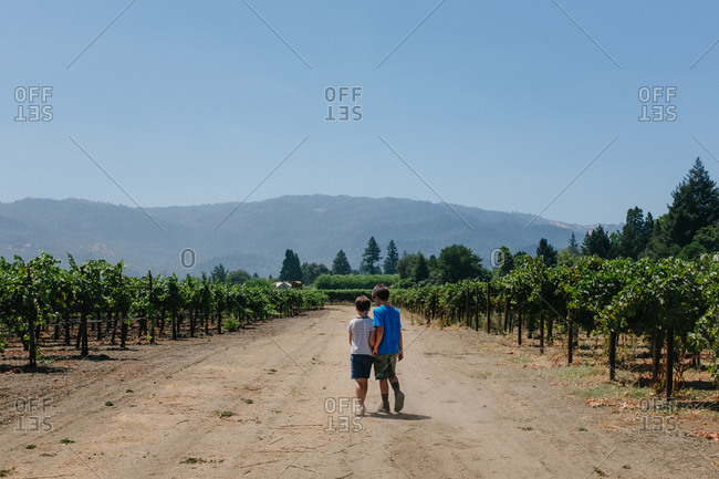 Boys hugging while walking down path of vineyard in Napa Valley, California