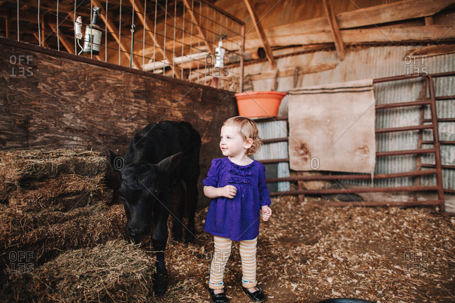 Little girl standing by a baby calf