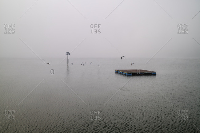 Seagulls flying around floating dock